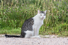 Cat Misha Fotografia de Stock
