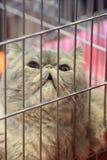 Cat. Misunderstanding stock images