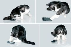 Cat and mobile. Cat playing with touch screen smart phone Royalty Free Stock Photo