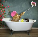 Cat takes a bath. The cat with mobile phone this takes a bath stock photos