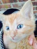 Cat modèle Photo libre de droits