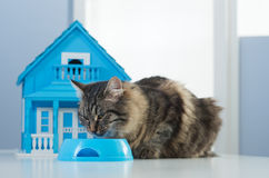 Cat and model house Stock Image