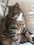 Cat Model Resting mayor diabética masculina fotografía de archivo libre de regalías