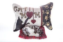 Cat Mom Fotos de Stock