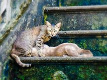 Mother cat and her kitten sitting on old  wet stair. Cat mom and her kid on  green weed covered old stair Royalty Free Stock Image