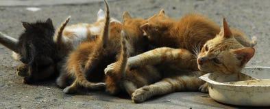 Cat Mom Stock Photos