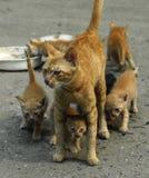 Cat Mom Stock Photo