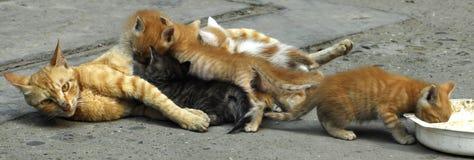 Cat Mom Royalty Free Stock Photo