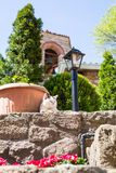The cat and monastery bell tower on background Stock Photography