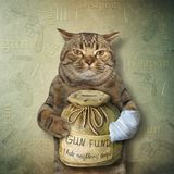 Cat with a money box for gun 2. The cat is holding a money box for a gun fund royalty free stock photos