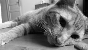 Cat. Monochrome cat style Stock Photo