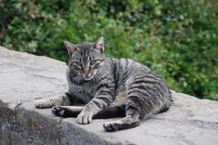 Cat at Monserrat Mountain Stock Photo