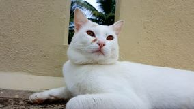Cat mood white cat motivation stock photos