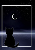 Cat and moon Royalty Free Stock Photos