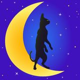 Cat on the Moon Royalty Free Stock Photos