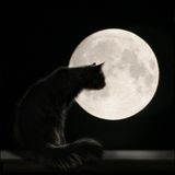 Cat On the Moon. Photo with cat and full moon. Night picture Royalty Free Stock Photo
