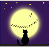 Cat and Moon Stock Image