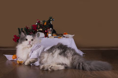 Cat in the morning after New Year's party Stock Photography