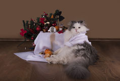 Cat in the morning after New Year's party Royalty Free Stock Images
