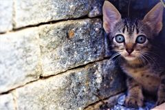 Cat the most beautiful of felines. Cat the most beautiful of the felines stock images