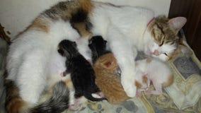Cat Mother con 4 gatitos recién nacidos fotos de archivo