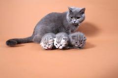Cat mother watching her babies Stock Photos