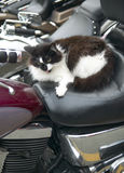 Cat in a motorbike. Vertical format Stock Photos