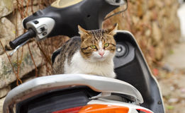 Cat on motorcycle Royalty Free Stock Image