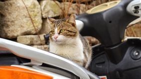 Cat on motorcycle Stock Photos