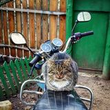 A cat is on a motorcycle Stock Photos