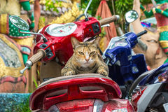 Cat on a motorcycle Royalty Free Stock Photo