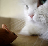 Cat and Mouse. A cat looking at a toy mouse royalty free stock photography