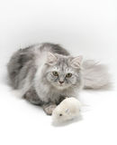 Cat and Mouse. Grey cat and mouse toy Stock Image