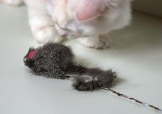Cat and Mouse. White cat playing with a toy mouse Stock Photo