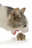 Cat and mouse. On white background stock photo