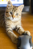 Cat with Mouse Stock Images