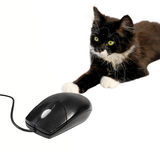 Cat and mouse 3 Stock Images