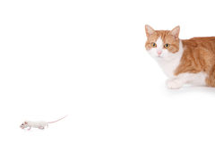 Cat and mouse. Humor concept with cat and mouse stock photography