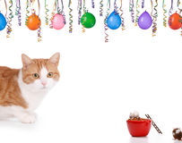 Cat and mouse. Having a party on a white background Stock Images