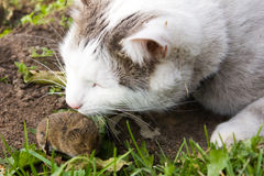 Cat and mouse. Close up photo of cat and mouse Stock Photography