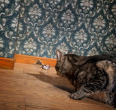 Cat and mouse in a luxury old-fashioned room. Cat looks at the mouse Stock Photography