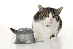 Cat mouse and mousetrap. Stock Photography