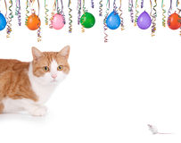 Cat and mouse party. Cat and mouse having a party on a white backgroun Stock Photos