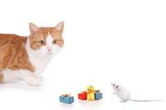 Cat and mouse party. Cat and mouse having a party on a white backgroun Royalty Free Stock Image