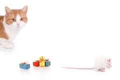 Cat and mouse party. Cat and mouse having a party on a white backgroun Royalty Free Stock Images