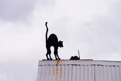 Cat and mouse on the rooftop in Ushuaia Stock Images