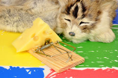 Cat And Mouse Trap Royalty Free Stock Image
