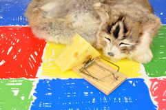 Cat And Mouse Trap Royalty Free Stock Photo