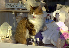 Cat and mouses. Real cat and toys mouses at souvenir shop window.peaceful coexistence concept stock photos