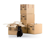 Cat with moving carton boxes stack Royalty Free Stock Photography